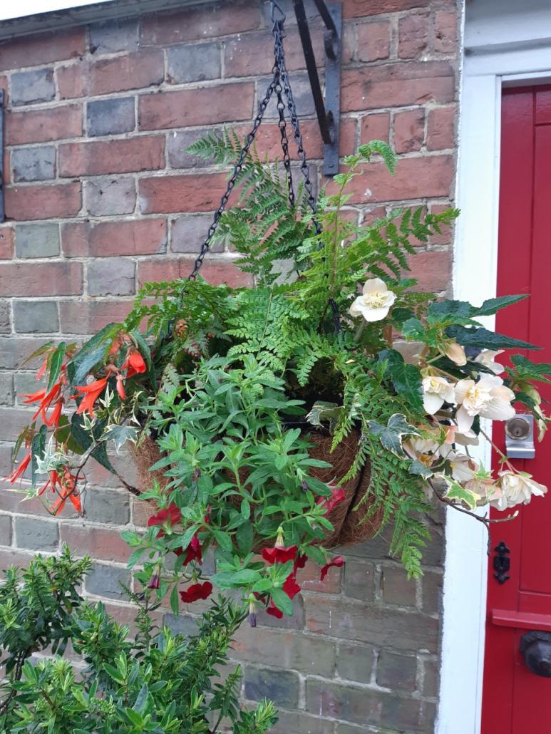 Image hanging basket