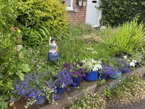 Image flowers on border of garden