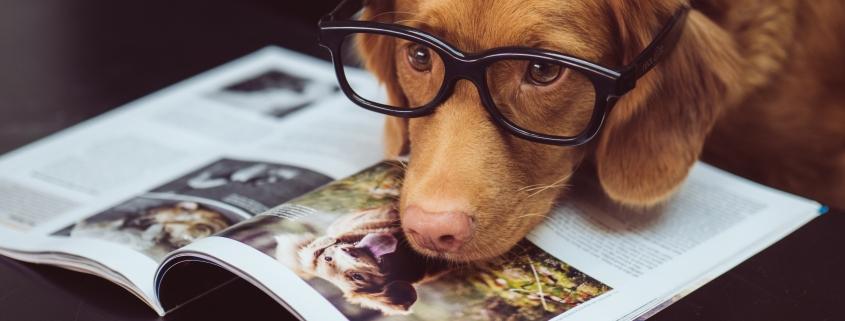 dog and magazine